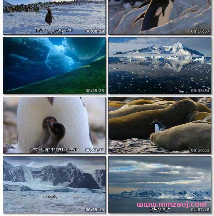 2019迪士尼英语纪录片《企鹅小萌萌 Penguins》下载 mp4/1080p/中英双字 百度云网盘