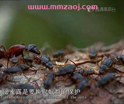 英语自然百科纪录片《蚂蚁:大自然的神秘力量 Ants: Nature's Secret Power》下载