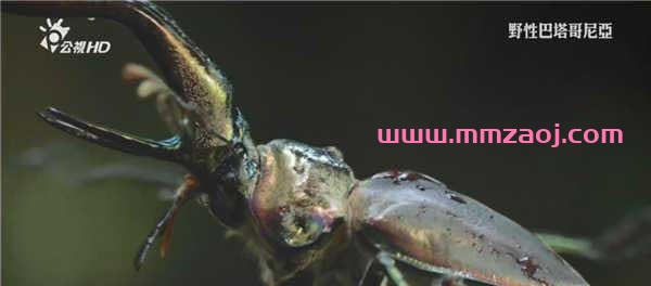 BBC纪录片《野性巴塔哥尼亚 Wild Patagonia》全3集下载 mkv/720p/国英双语 百度云网盘