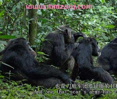 2012迪士尼自然纪录片《黑猩猩 Chimpanzee》下载 mp4英语720p/中英字幕 百度云网盘