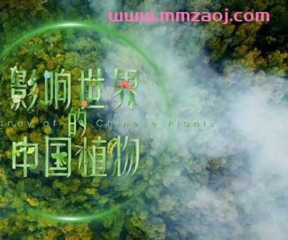 2019央视植物类纪录片《影响世界的中国植物》全10集下载 mp4/1080p/国语中字 百度网盘